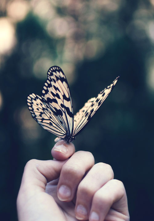 butterfly Beautiful Peaceful Whatsapp Dp Images