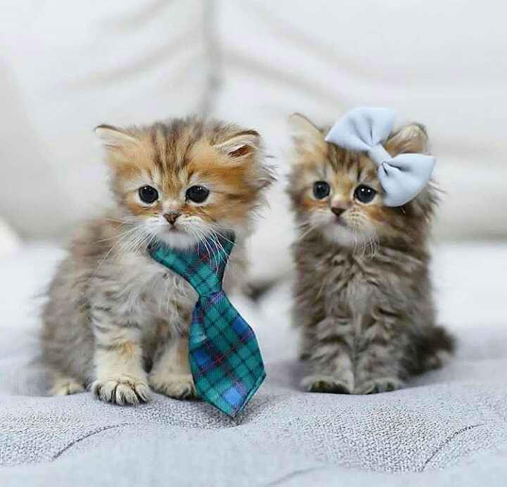 cat Latest Status Dp Images pics hd