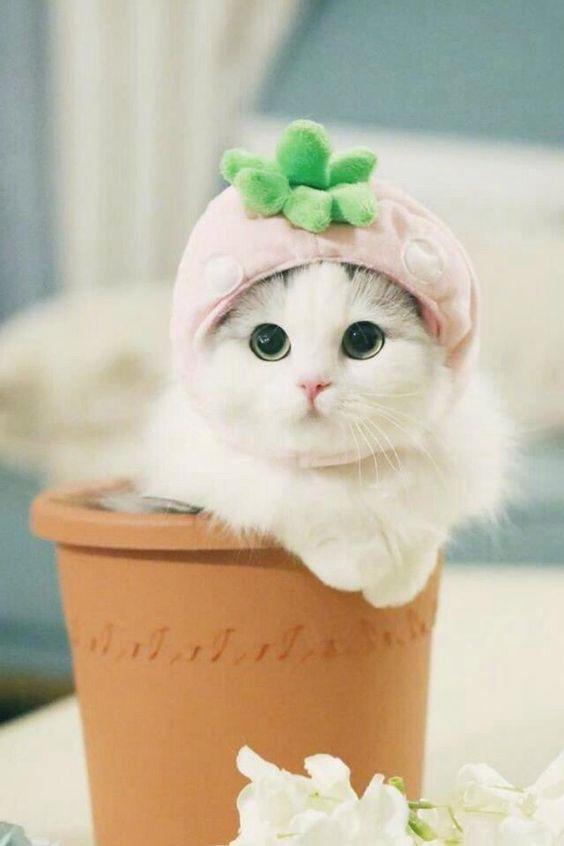 cat Mast Dp Images photo