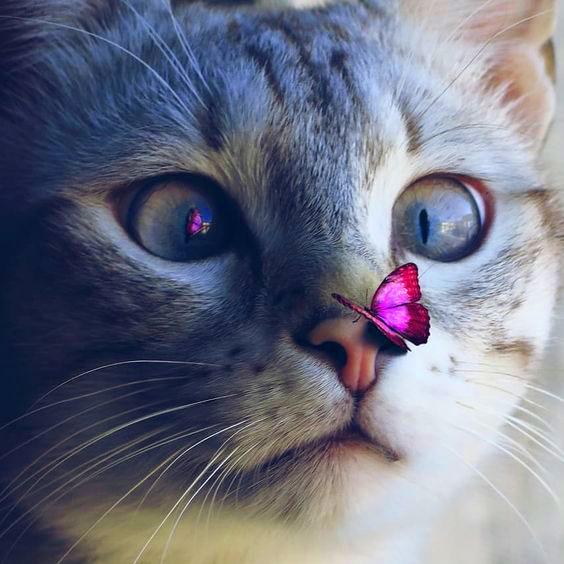 cat Profile Images photo download 1