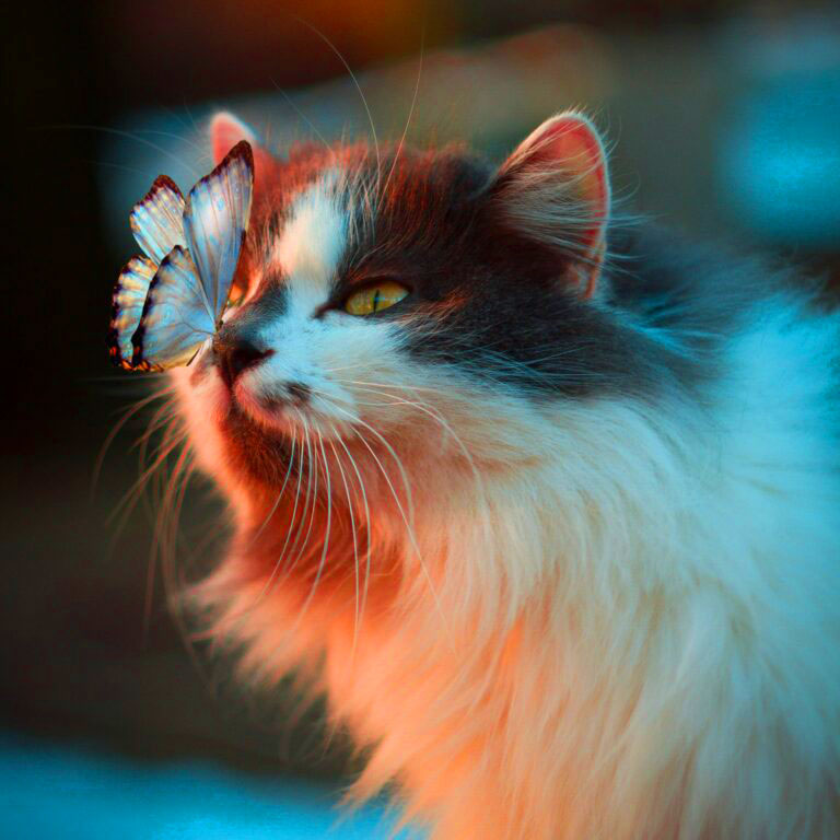 cat lovers Profile Images 1