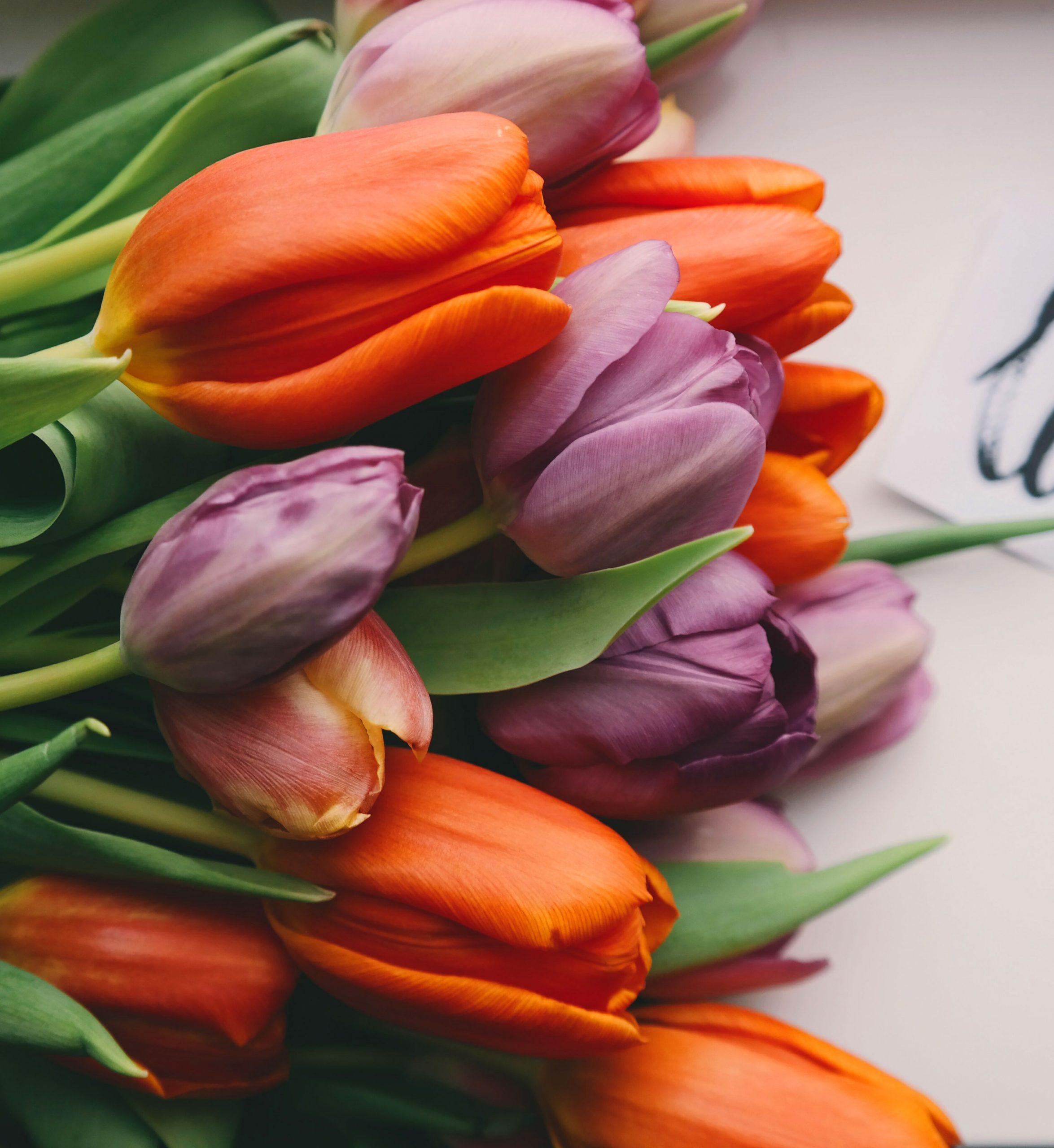 flower Love Couple Sad Dp Images hd