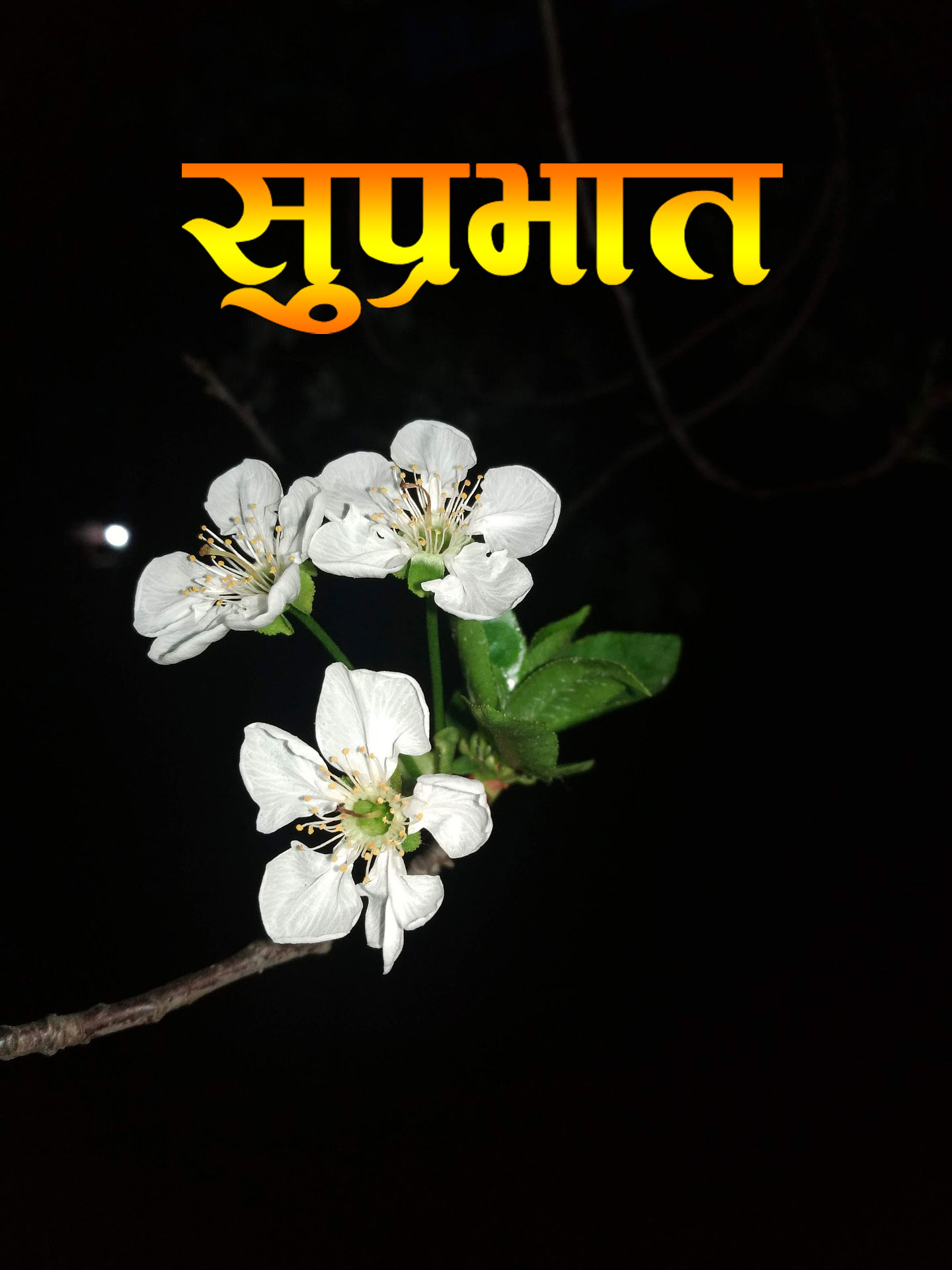 flower Suprabhat Images
