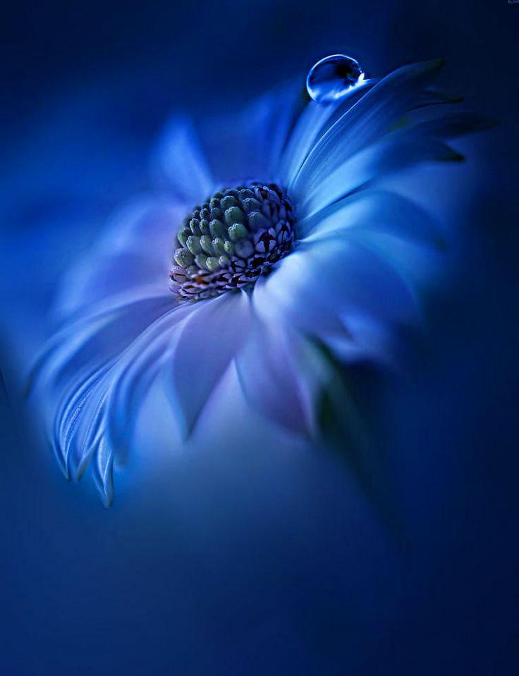 flower hd Latest Superb Whatsapp Dp Images