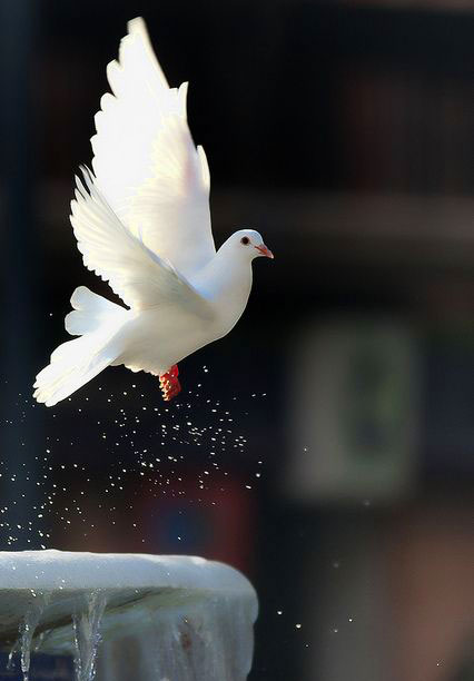 free Peaceful Whatsapp Dp Images