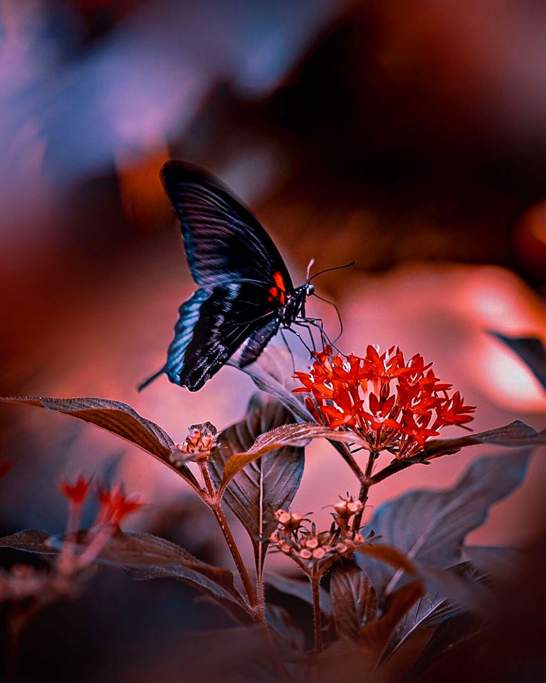 free butterfly 4k Uniqe Whatsapp Dp Images