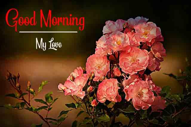 good morning Latest Free