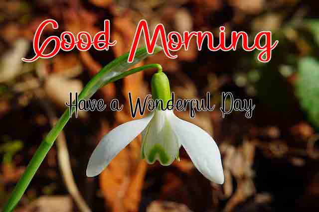 good morning Pics Pictures 5
