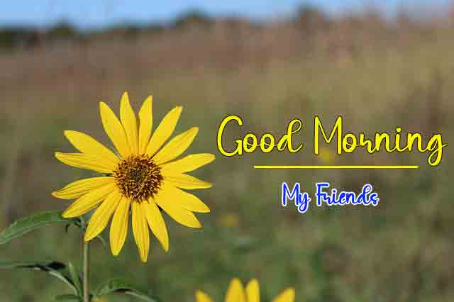 good morning Pics With Sunflower