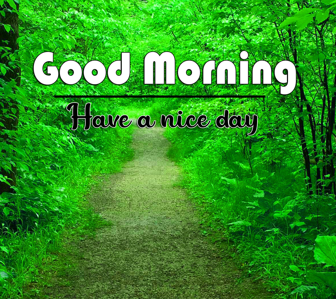 good morning Whatsapp dp Images With Beautiful Nature