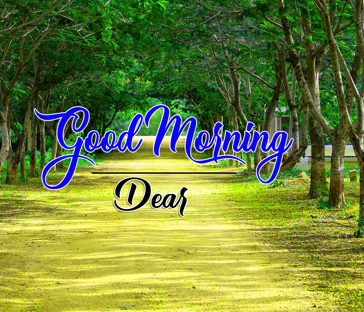 good morning Whatsapp dp Images With Nature Walk