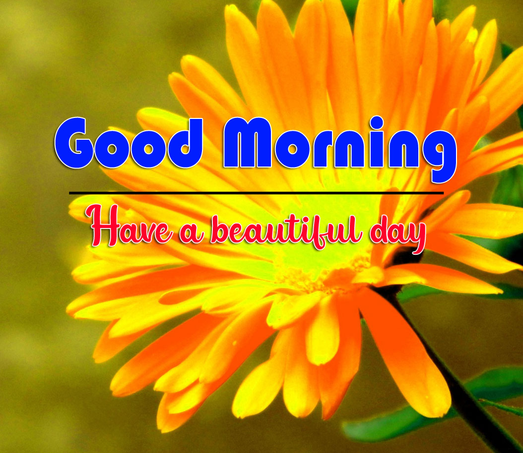 good morning Whatsapp dp Pictures 2021