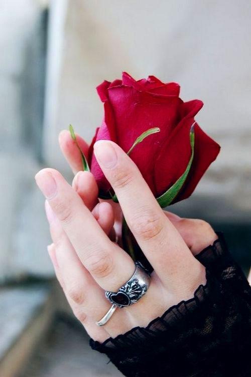 rose Superb Whatsapp Dp Images photo hd