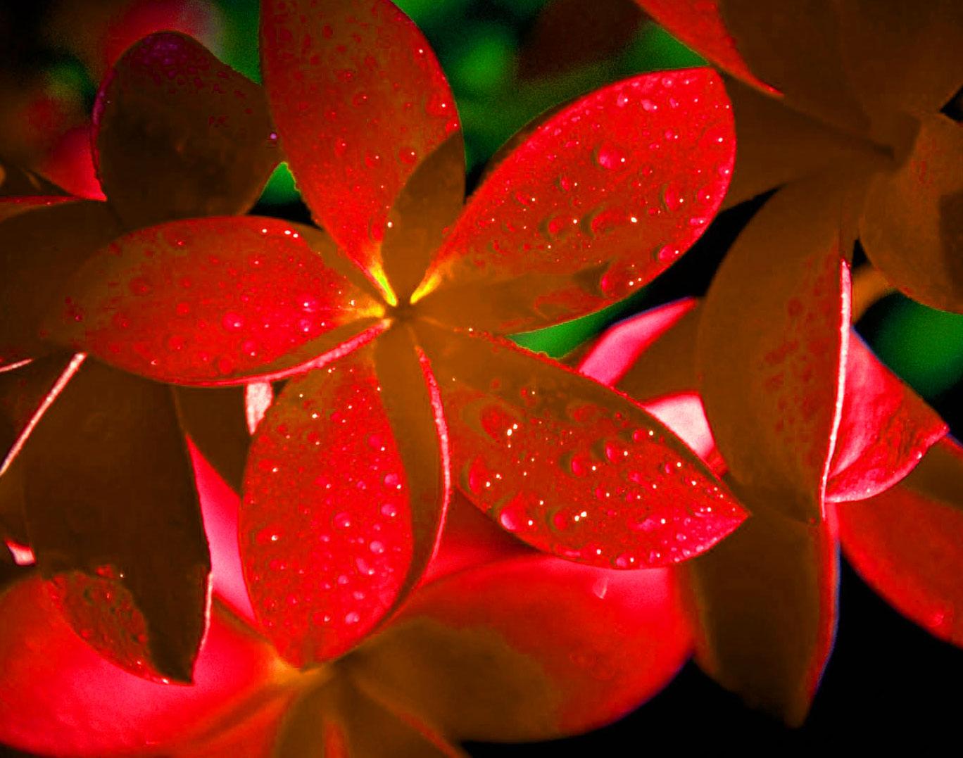 thumb 1080p Flower DP